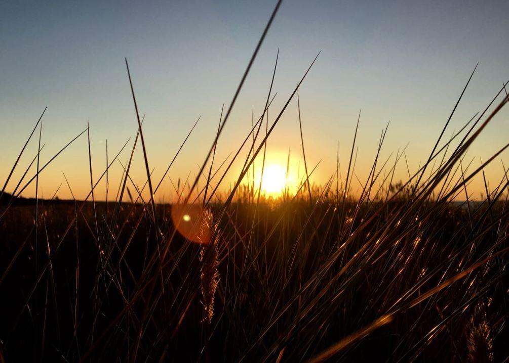 Sonnenuntergang über dem Dünengras