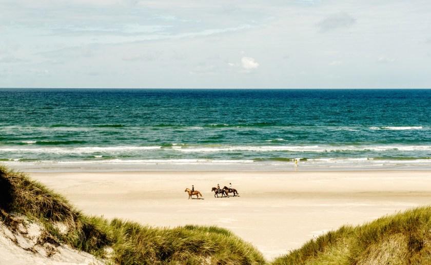 Dänemark, Nordsee: Reiten direkt am Strand