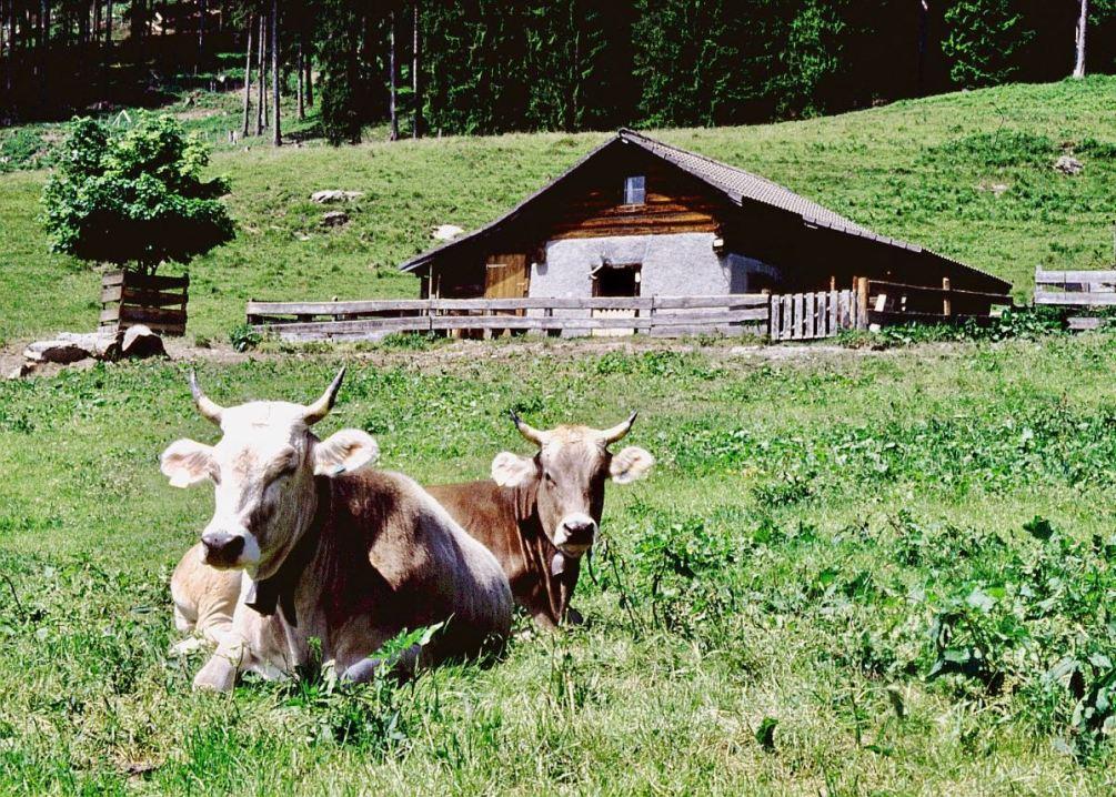 Schweiz mit Kindern: Ideen für den Familienurlaub in Graubünden, Heidialp oberhalb Maisfeld, Foto: Graubünden Ferien