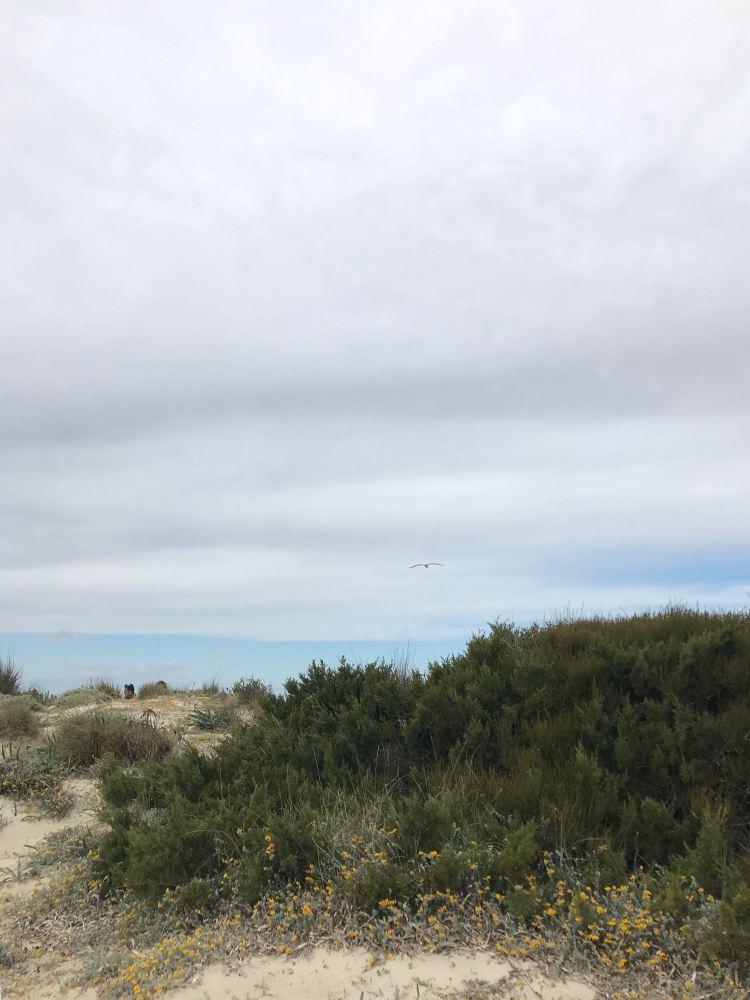 Strand Playa Es Trenc (oder auf katalanisch Platja Es Trenc)