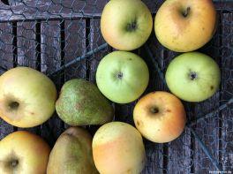 Äpfel Birnen