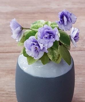 Rob's Chilly Willy ist eine amerikanische Miniatursorte des Züchters Ralph Robinson - ein sehr guter und bekannter Züchter. Diese Sorte ist bunt panaschiert und zeigt kleine blauschattierte gefüllte Blüten und wird max. 5 cm im Durchmesser
