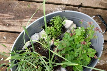 Auswahl Wasserpflanzen