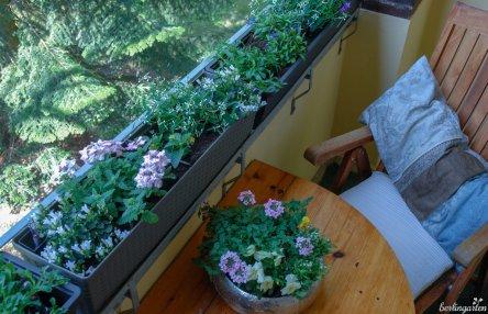 Noch sind die Pflanzen klein, aber über den Sommer werden sie tüchtig wachsen