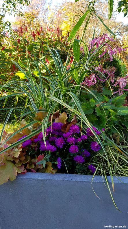 Glockenblume, Gräser und Aster halten lange im Kübel
