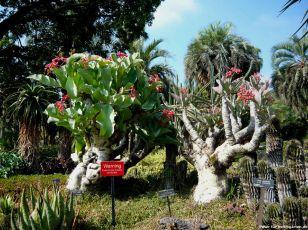 Blühende Kakteen Desert Garden