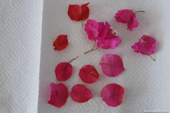 Blütenblätter