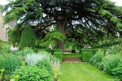 Blick vom Old Garden Richtung Zeder
