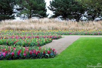 Blumenbänder vor Gräsern