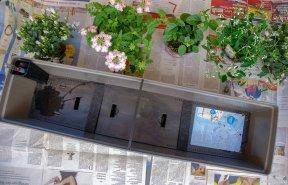 Der Blumenkasten sollte so groß wie möglich sein und ein Wasserreservoir haben