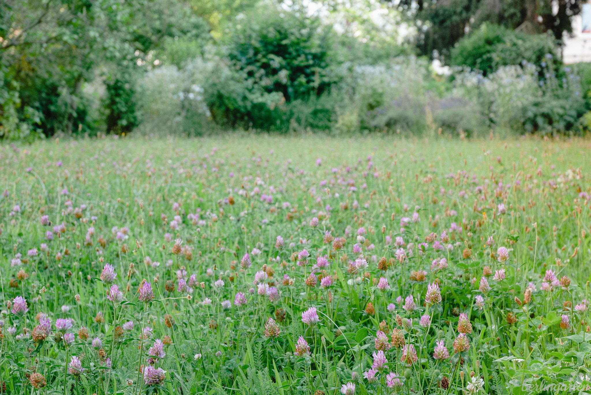 Blumenrasen – die entspannt-ökologische Alternative