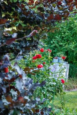 Perfekte Harmonie: rotes Laub und rote Blüten