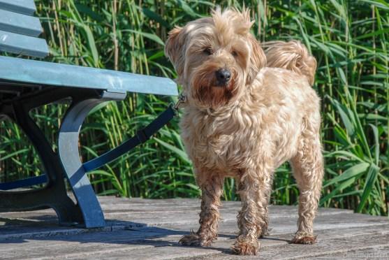Gartenhund