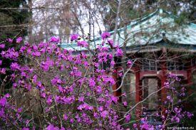 Japanpavillon