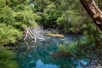 Dampfende Quellen in Tokaanu am Lake Taupo, Nordinsel. Die Erde ist hier sehr aktiv, überall zischt und brodelt es