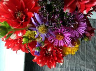 Der Herbst überzeugt mit bunten Blütenfarben
