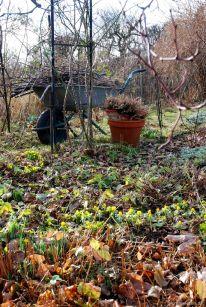Erster Gartentag mit Baum- und Stauenschnitt