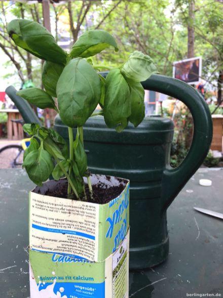 Fertiger Upcycling-Basilikumtopf
