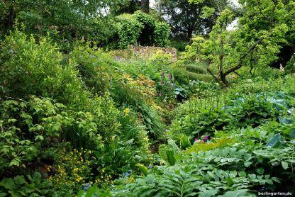 Feuchtigkeitsliebende Pflanzen am Wasserlauf