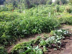 Gartenarbeitsschulbeete