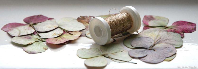 Getrocknete Hortensienblüten mit Silberdraht