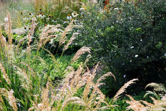Gräser, Sonnenhut, Astern