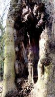 Höhle Stamm