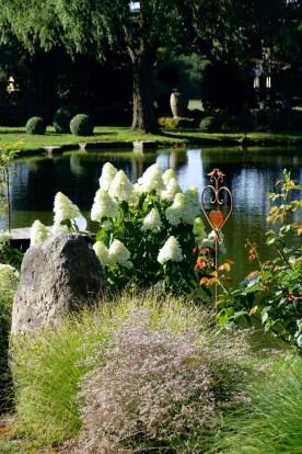 Rispenhortensien fühlen sich am großen Teich besonders wohl