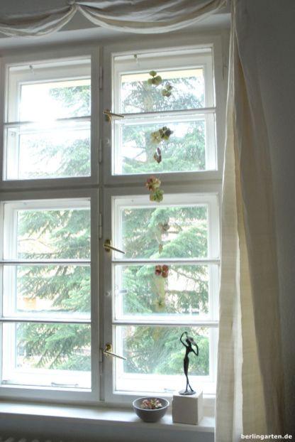 Hortensien am Fenster