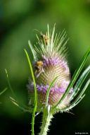 Im Lesachtal ist die Insektenvielfalt enorm. So ist auch bei Simone viel los