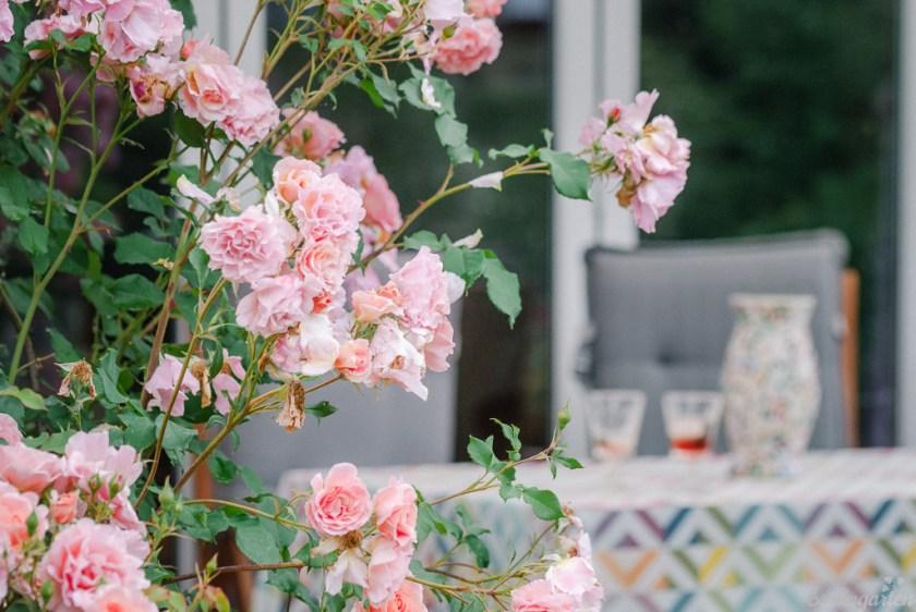 Romantisch: die Terrasse mit Rosenpergola