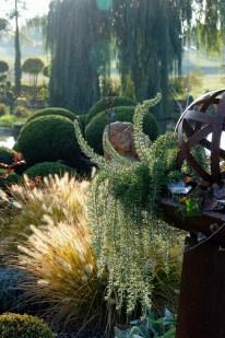 Der Herbst in Ullis und Günters Garten ist zauberhaft: Die Mischung aus Weiher, Gräsern (hier Pennisetum) und späten Stauden verbreitet eine besondere Stimmung