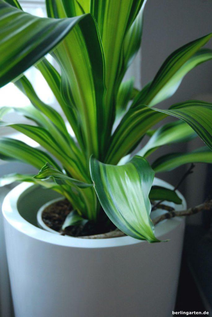 ZimmerpflanzenTipps fr den Schatten tolle Pflanzen und