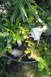 Ein bepflanzter Mini-Teich in meinem Garten