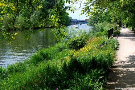 Natürliche Uferbepflanzung