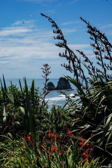 Überall ist er anzutreffen: der Neuseelandflachs. Er ist nicht nur eine wunderschöne Pflanze, er dient auch zur Herstellung von Seilen und Tauen