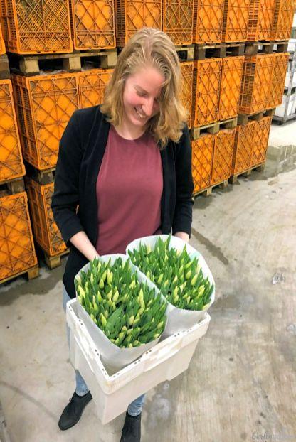 Nienke mit verkaufsfertigen Tulpen