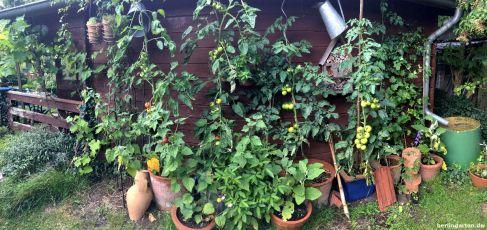 Panorama Gemüse