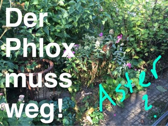Trauerspiel Phlox. Hier wird wahrscheinlich Aster Mönch hinkommen