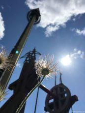 Samenstand Kuhschelle - und der welthöchste Runterfallturm