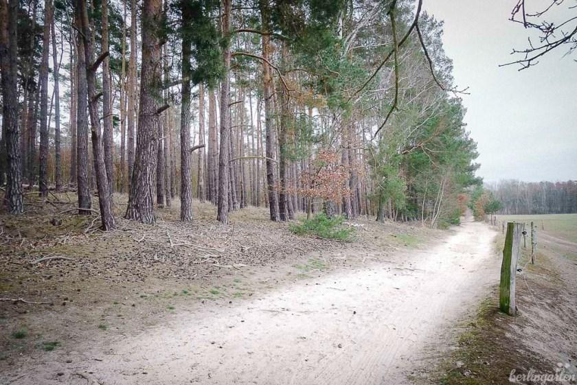 Wald am Mühlenfließ, Nähe Kähnsdorfer See