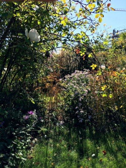 Warmes und herbstliches Licht im Septembergarten