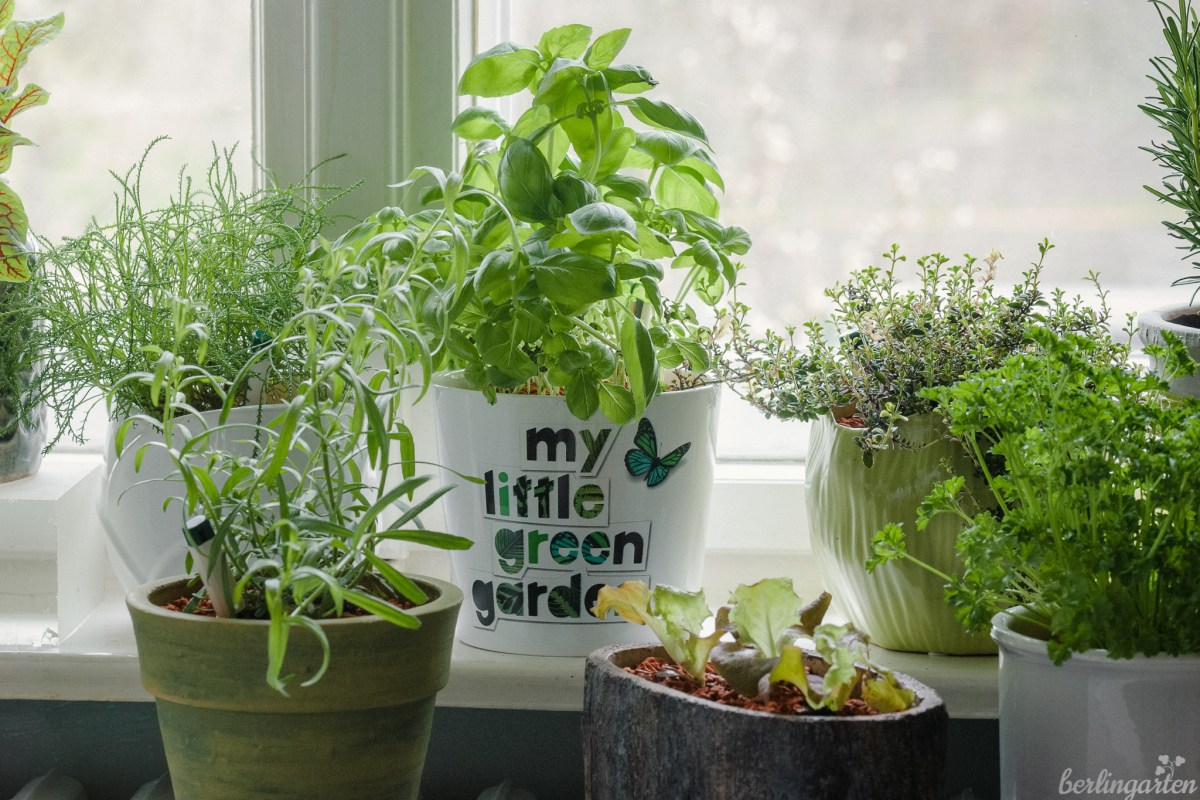 Basilikum, Salat, Estragon, Thymian, Olivenkraut in SERAMIS