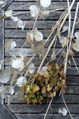 Aus dem Garten frisch in den Adventskranz: Silberblatt und Hortensie