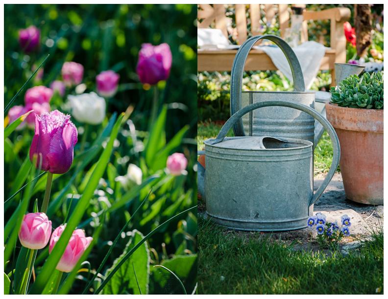 Tulpen mit alten Zinkkannen