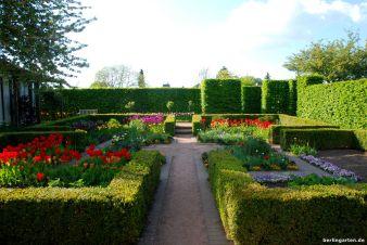 Tulpen im Buchskarree der Themengärten