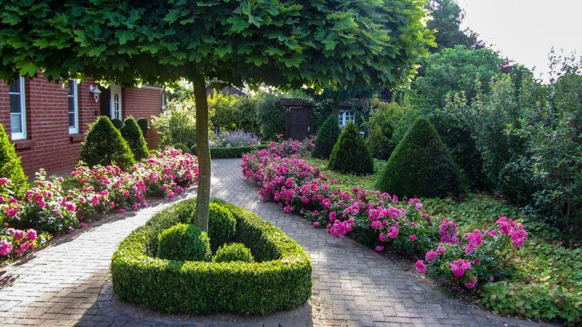 Katrins Vorgarten mit Rose 'Palmengarten Frankfurt'