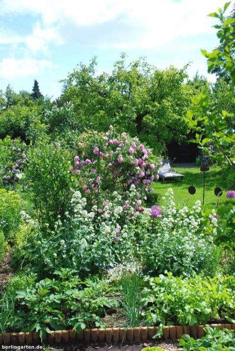 Blick Richtung Laube: Rasen muss auch sein