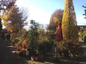 Königliche Gartenakademie, Gehölze