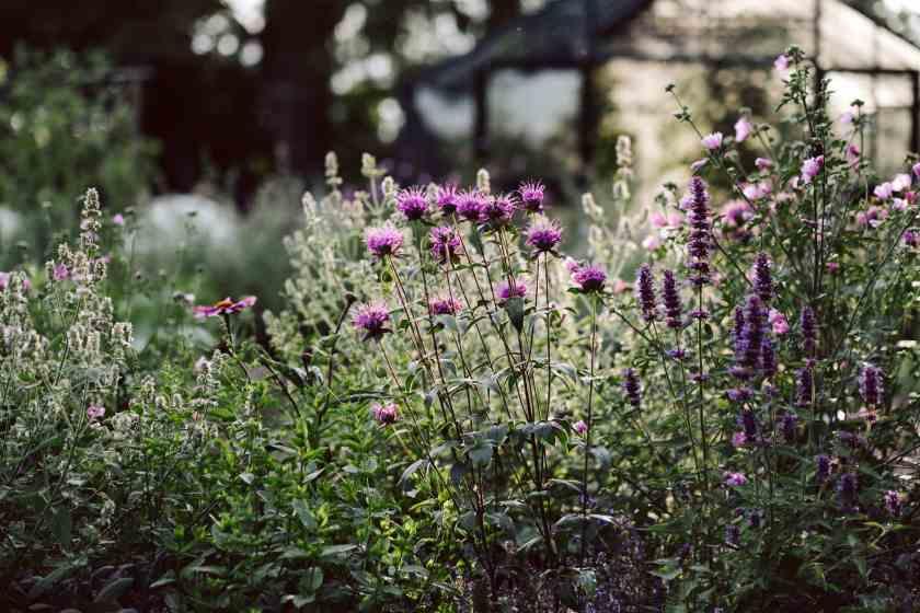 Essbare Blütenpflanzen